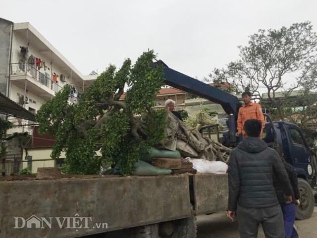 Xôn xao Nam Định: Cây sanh cổ bán kèm cổng nhà giá 6.000 USD? - 4