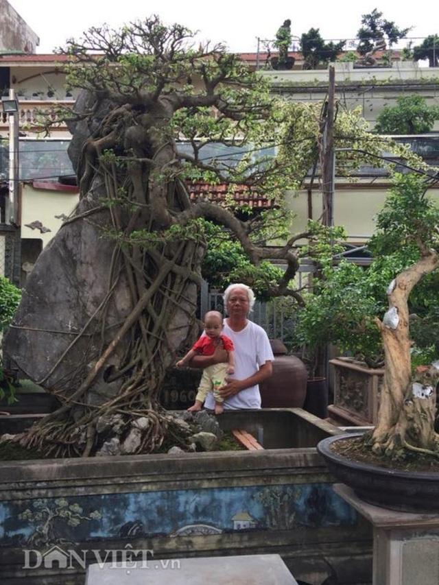 Xôn xao Nam Định: Cây sanh cổ bán kèm cổng nhà giá 6.000 USD? - 6