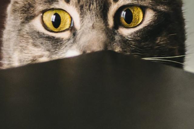 Mèo có khả năng phản ánh một phần tính cách của chủ - 1