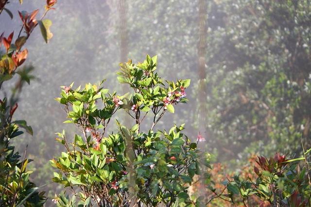Kỳ ảo sắc hoa Đỗ Quyên trong mùa xuân mới - 11