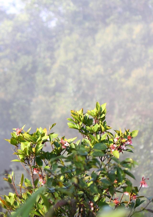 Kỳ ảo sắc hoa Đỗ Quyên trong mùa xuân mới - 12
