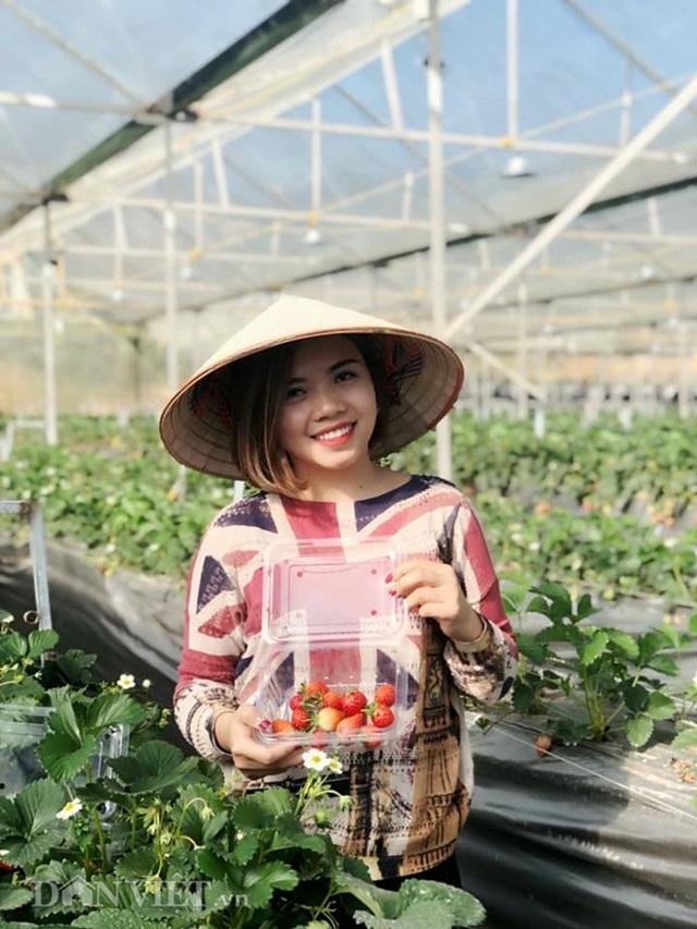 Bỏ việc nhà nước, cắm sổ đỏ trồng dâu tây, khách nườm nượp - 5