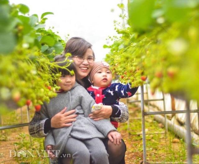 Bỏ việc nhà nước, cắm sổ đỏ trồng dâu tây, khách nườm nượp - 6