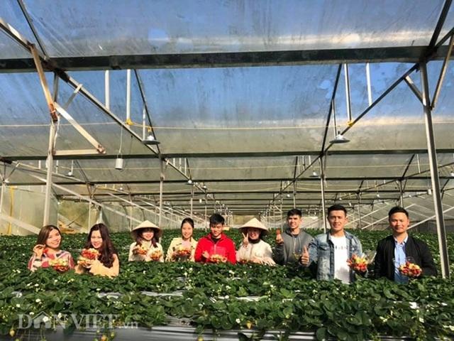 Bỏ việc nhà nước, cắm sổ đỏ trồng dâu tây, khách nườm nượp - 9
