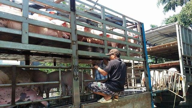 Đồng Nai đã lập 2 chốt kiếm dịch tạm thời để phòng chống nguy cơ lây nhiễm ASF từ việc vận chuyển heo đi tiêu thụ.