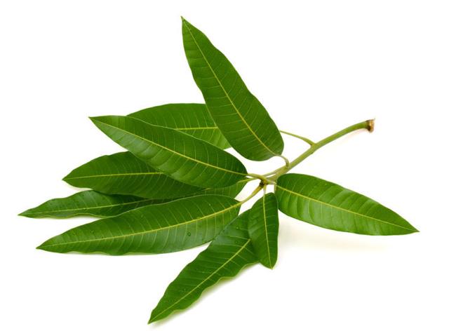 Điểm mặt các loại cây thuốc nam  hỗ trợ chữa tiểu đường tuýp 2 hiệu quả - 2