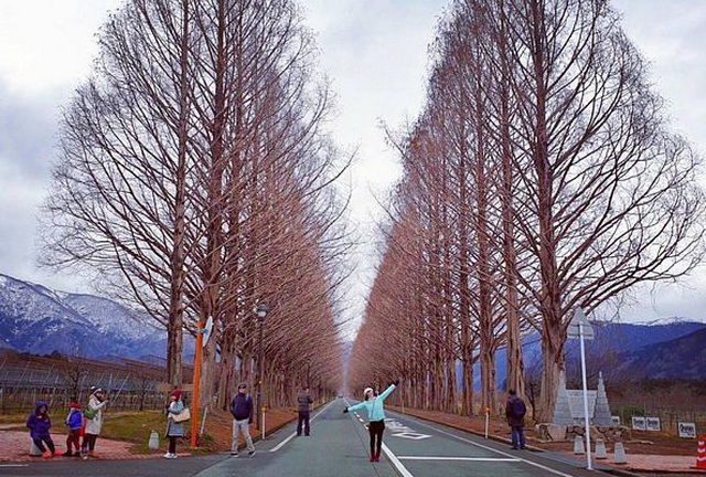 tn_makino2.jpg