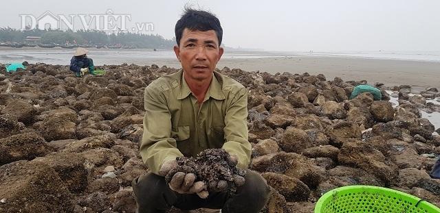 Nam Định: Săn lộc biển bé tin hin, bám ở đá, kiếm nửa triệu đồng/ngày - 4