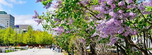 Hokkaido - Màu áo hoa rực rỡ của mùa xuân - 1