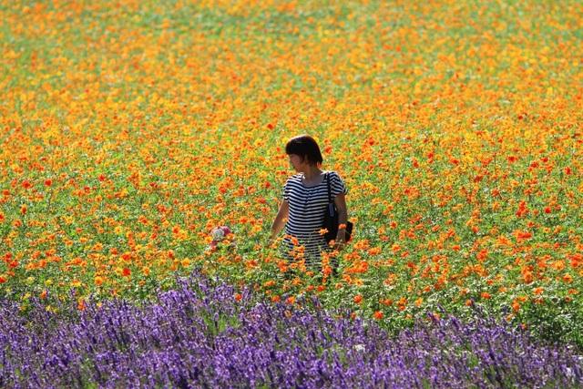 Hokkaido - Màu áo hoa rực rỡ của mùa xuân - 3