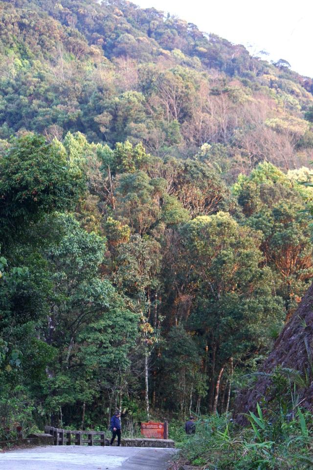 Nhiều đàn Voọc ngũ sắc mới xuất hiện tại Vườn Quốc gia Bạch Mã - 17