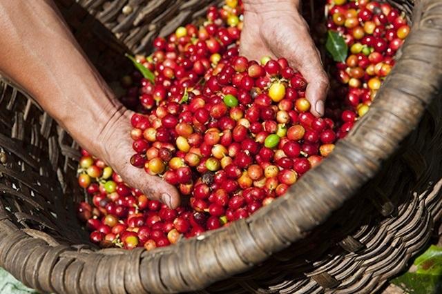 Tháng 3, rộn ràng cùng lễ hội cà phê Buôn Ma Thuột lớn nhất Việt Nam - 1