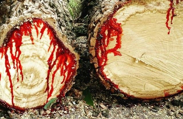"""""""Rùng mình"""" loài cây chảy máu giống con người! - 1"""