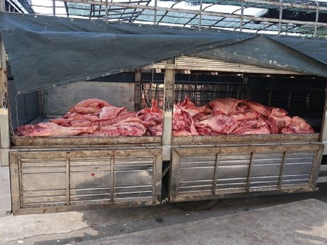 TPHCM lên phương án đối phó dịch tả lợn Châu Phi - 1