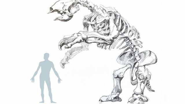 Hóa thạch con lười khổng lồ tiết lộ hoàn cảnh sống trước khi tuyệt chủng - 1