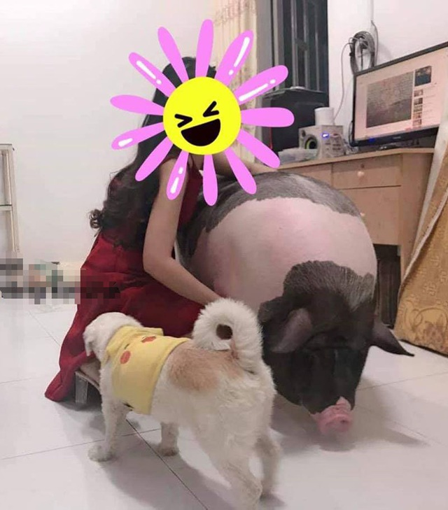 Boss lợn Trung Quốc 1,5 triệu đồng/kg: Cô sen Hà thành xịt nước hoa, dắt dạo phố - 5