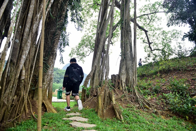 Kỳ lạ cây đa di chuyển ở Ninh Bình - 13