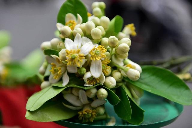 hoa buoi - 9