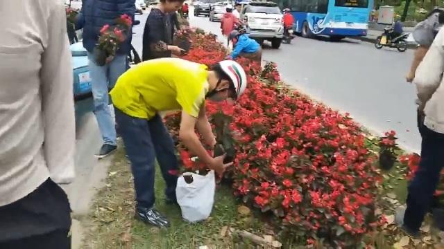 Hà Nội: Ngao ngán với cảnh người dân hôi... hoa trên đường Kim Mã - 4