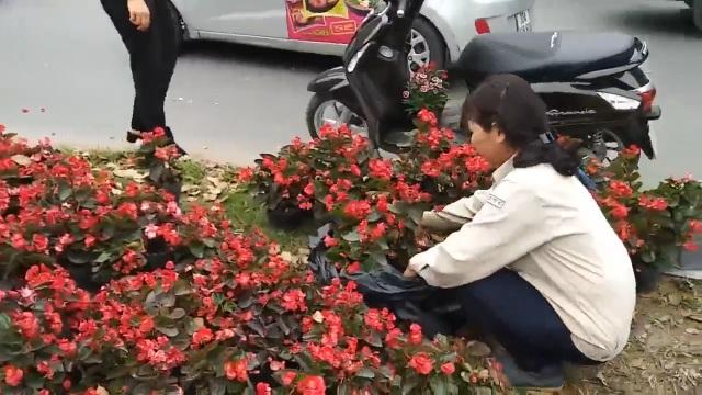 Hà Nội: Ngao ngán với cảnh người dân hôi... hoa trên đường Kim Mã - 5