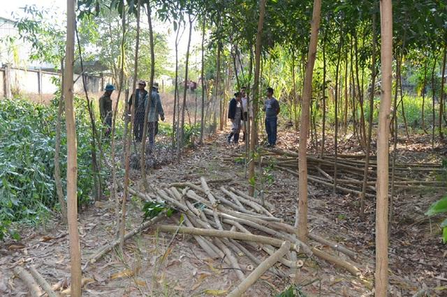 Vụ cưỡng chế 9.700 m2 đất của nguyên Bí thư huyện: Tự nguyện giao đất - 1