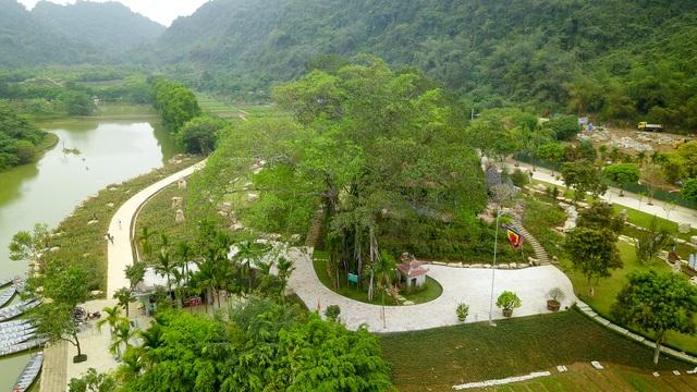 Kỳ lạ cây đa di chuyển ở Ninh Bình - 1