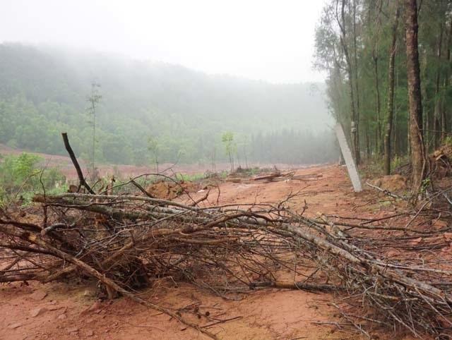 Vụ đào ao nuôi tôm, phá rừng phòng hộ: Dỡ nhà vi phạm, buộc trồng lại cây - 4