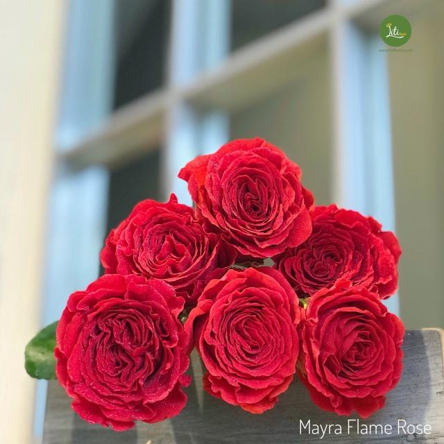 10 loại hoa hồng đắt đỏ dịp 8/3 khiến chị em mê mẩn - 2