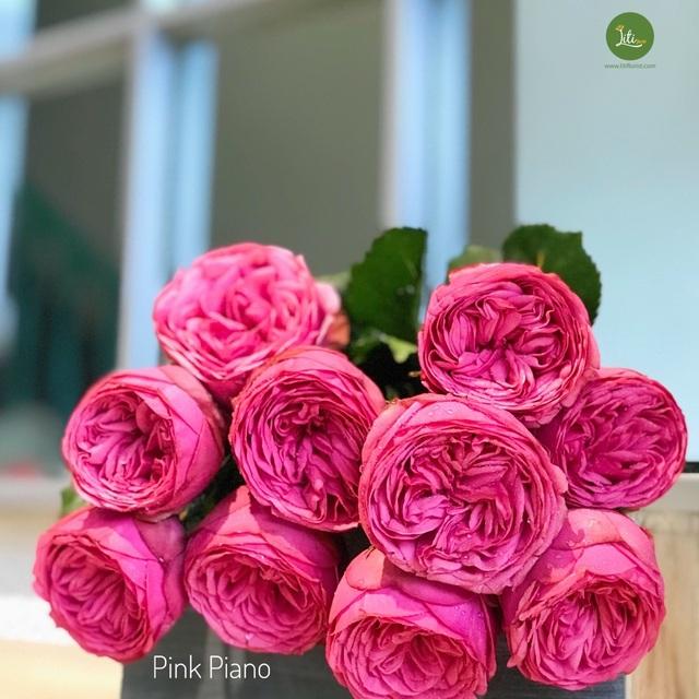 10 loại hoa hồng đắt đỏ dịp 8/3 khiến chị em mê mẩn - 10