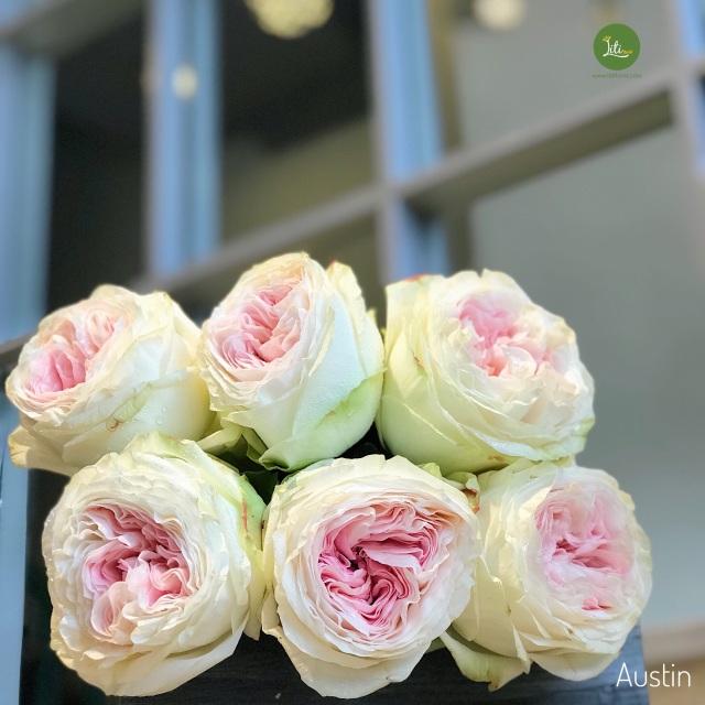 10 loại hoa hồng đắt đỏ dịp 8/3 khiến chị em mê mẩn - 4