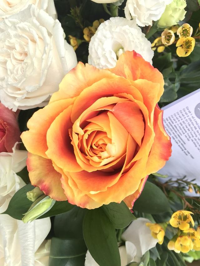 10 loại hoa hồng đắt đỏ dịp 8/3 khiến chị em mê mẩn - 7