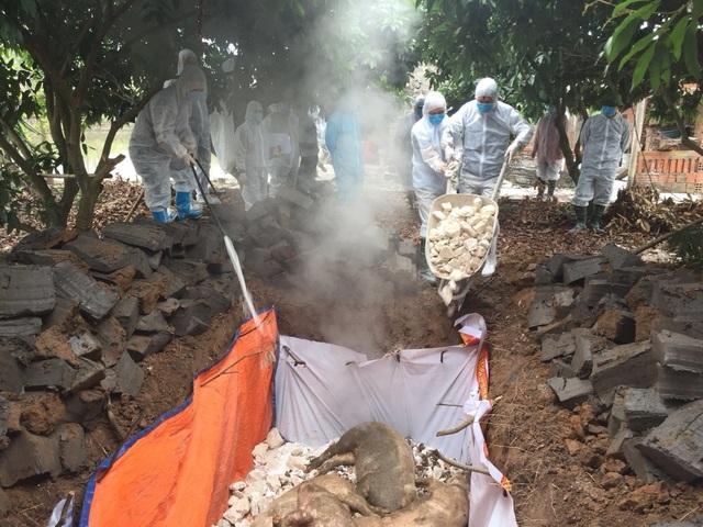 Quảng Ninh: Xuất hiện dịch tả lợn châu Phi, tỉnh ban hành công điện khẩn - 1