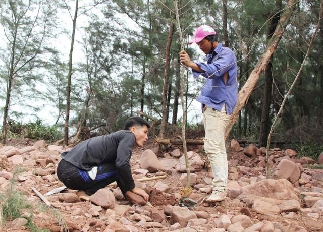 Vụ đào ao nuôi tôm, phá rừng phòng hộ: Dỡ nhà vi phạm, buộc trồng lại cây - 3