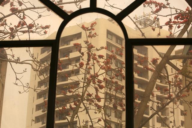 Hà Nội thơ mộng trong sắc đỏ hoa gạo - 11