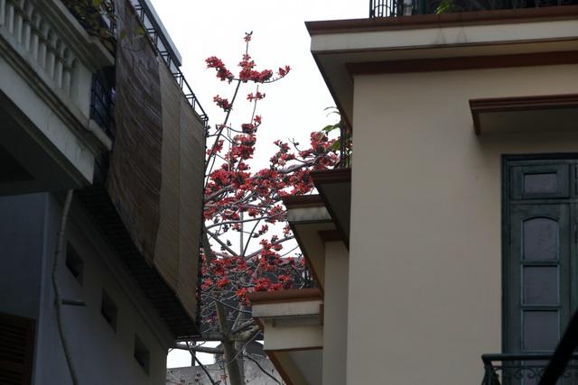 Hà Nội thơ mộng trong sắc đỏ hoa gạo - 7