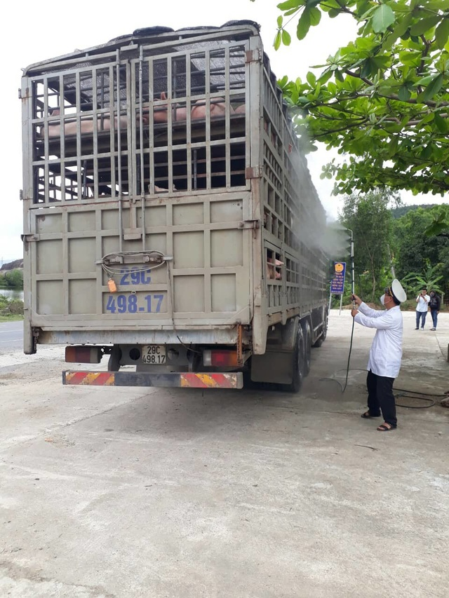 Dịch tả lợn châu Phi: Kiểm soát chặt chẽ các phương tiện vận chuyển lợn qua địa bàn Đà Nẵng - 2