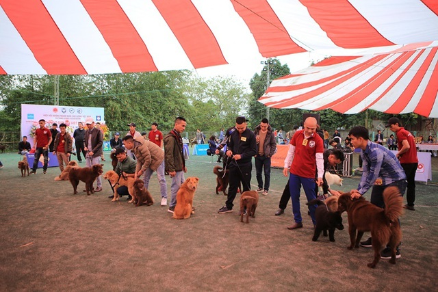 Hơn 250 chú chó bản địa tham gia hội thi sắc đẹp ở Hà Nội - 1