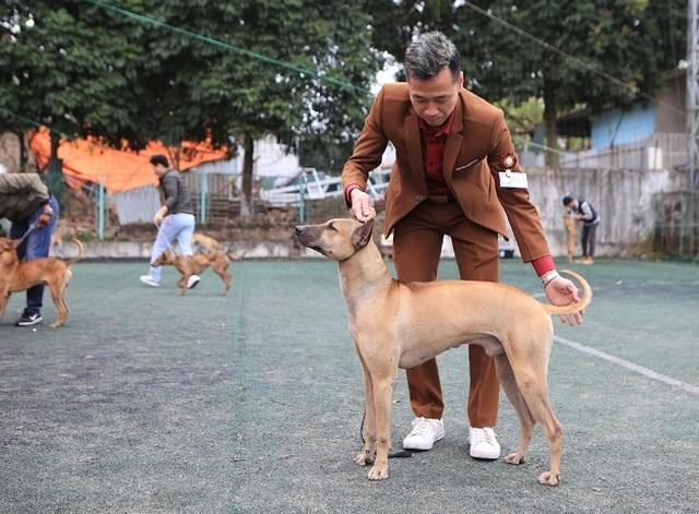 Hơn 250 chú chó bản địa tham gia hội thi sắc đẹp ở Hà Nội - 2