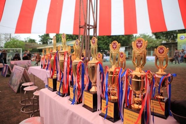 Hơn 250 chú chó bản địa tham gia hội thi sắc đẹp ở Hà Nội - 3