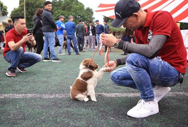 Hơn 250 chú chó bản địa tham gia hội thi sắc đẹp ở Hà Nội - 5