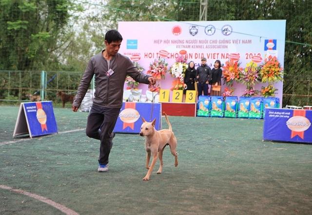 Hơn 250 chú chó bản địa tham gia hội thi sắc đẹp ở Hà Nội - 9