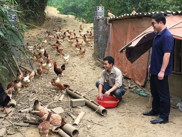 Trở về từ Hàn Quốc, 8X thả bạt ngàn gà trên đồi, bỏ túi 170 triệu đồng - 3