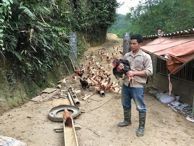 Trở về từ Hàn Quốc, 8X thả bạt ngàn gà trên đồi, bỏ túi 170 triệu đồng - 5