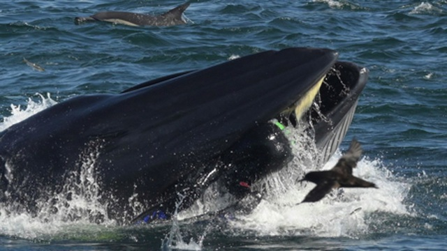 Bị cá voi khổng lồ cắn ngang người, vẫn sống sót như thần thoại - 1