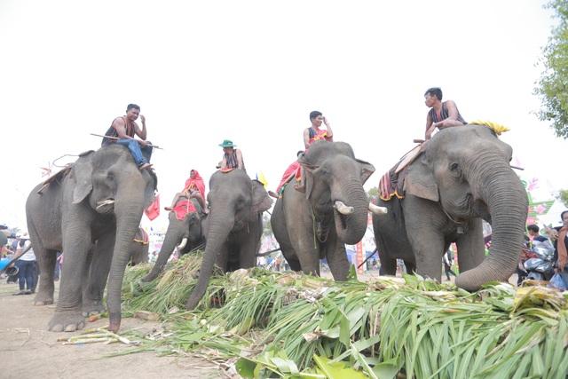 Đắk Lắk: Tưng bừng hội đua voi Buôn Đôn - 6