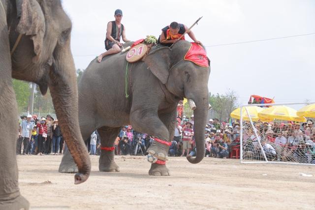 Đắk Lắk: Tưng bừng hội đua voi Buôn Đôn - 5