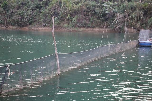 Ngăn hồ sông Đà nuôi cá, lãi hàng trăm triệu/năm - 2