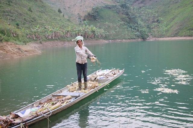 Ngăn hồ sông Đà nuôi cá, lãi hàng trăm triệu/năm - 5