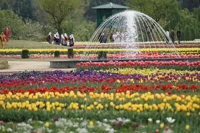 Vòng quanh thế giới ngắm những vườn tulip vạn người mê 3.jpg