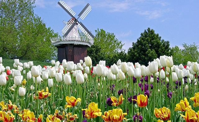 Vòng quanh thế giới ngắm những vườn tulip vạn người mê 5.jpg